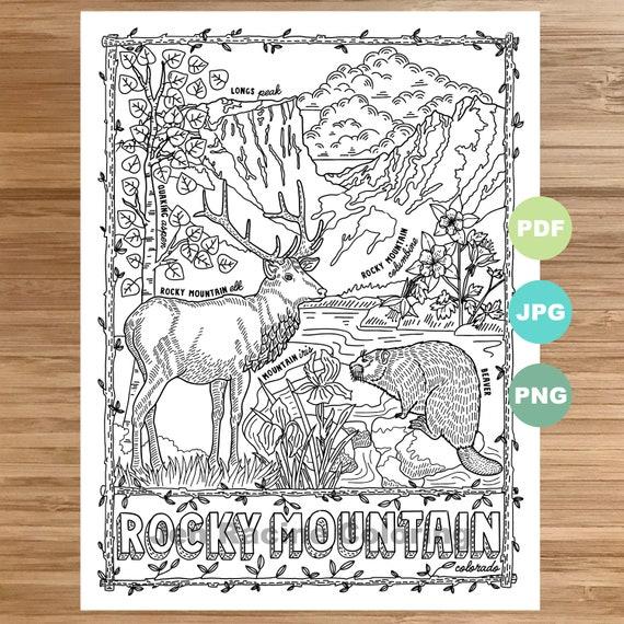 Desert Animals Coloring Page roxaboxen   Desert animals coloring ...   570x570