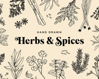 Hand Drawn Herbs Etsy