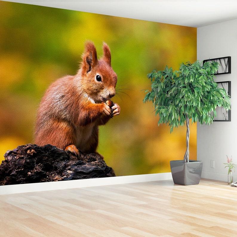 mural squirrel  reusable photowallpaper vlies wallpaper nonwoven large self adhesive Squirrel Animal temporary or traditional wallpaper