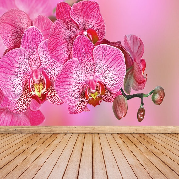 Pink Orchid Temporary Or Traditional Photo Wall Mural Wallpaper Pink Orchid Temporary Removable Large Traditional Wall Covering