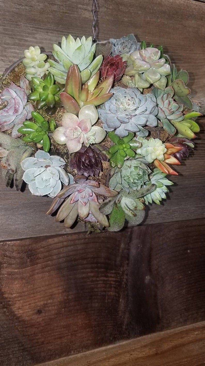 birthdays Living succulent heart made from iron frame wire form loaded with rooted succulents perfect for weddings etc. anniversaries