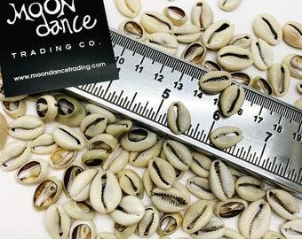 Cowrie Shells, Natural Sea Shells, Small Natural Sea Shells, Money Shells, Shell Beads, Bead, Cut Flat, Bulk Shells