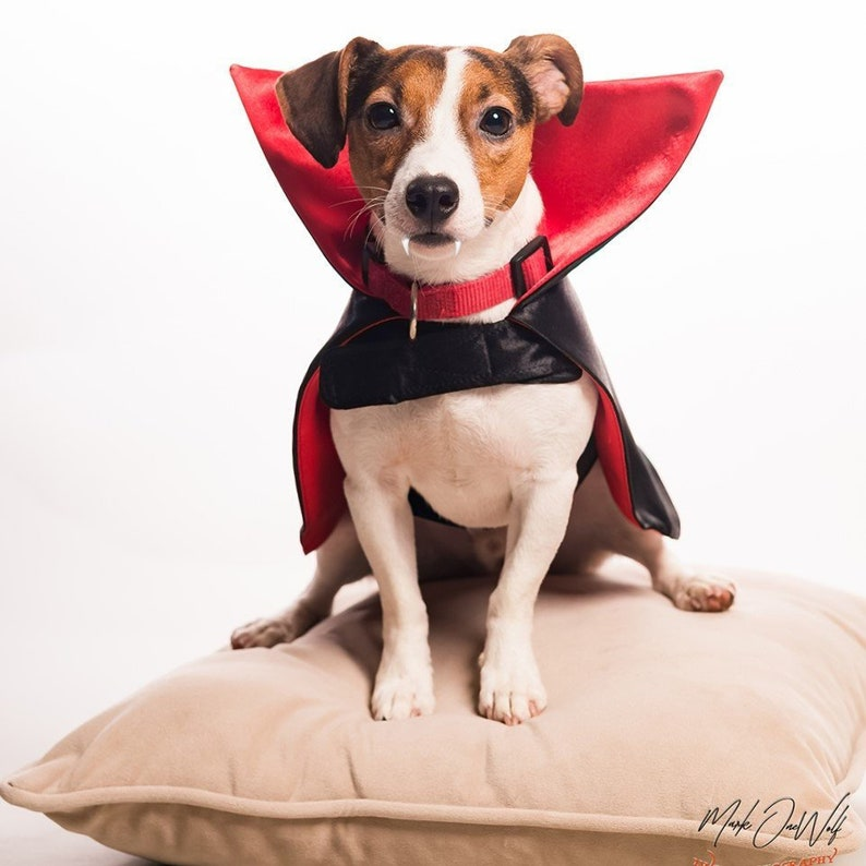 Dog Dad, Pet Parent, Count Dracula Halloween Costume, Photo Prop, Gifts  Under 50, Geeky Gifts for pets, Red Dracula Cape