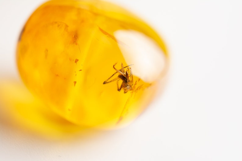 Amber fossil insect. Spider insect inclusion in amber Natural Baltic amber stone