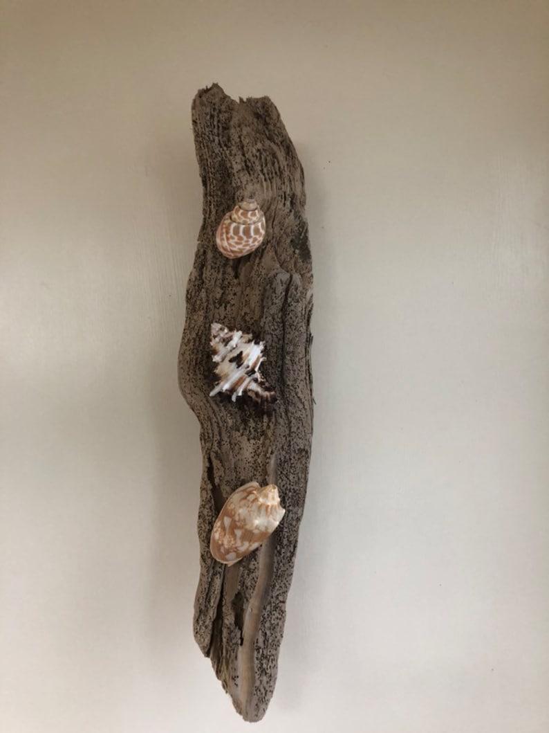 Driftwood Wall Decor Driftwood Display Bathroom Display image 0