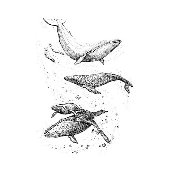 Whale Svg Whale Hanging Art Whale Art Black And White Whale Etsy
