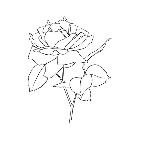 Rose Flower Line Drawing Rose Line Art Rose Poster Flower Etsy Drawing rose line drawing rose drawing line rose line lines hand painted pattern classic patterns flowers scenic spots grasshopper flowers shading painting template element sea pyridine classical. rose flower line drawing rose line art rose poster flower wall art botanical print rose art print peony poster rose illustration