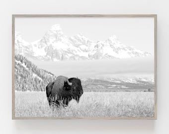 Buffalo Print,Bison Wall Art,American Bison Print,Black White Animal,Black White Bison Print,Black and White Printable Art,Printable Bison