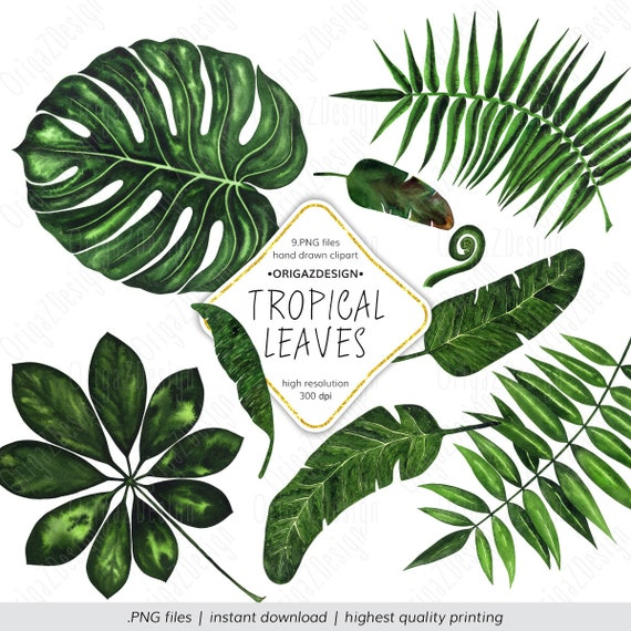 Tropical Leaf Clipart Tropical Leaves Clipart Monstera Palm Etsy Download transparent tropical leaves png for free on pngkey.com. tropical leaf clipart tropical leaves clipart monstera palm leaf banana tree leaves watercolor tropical clipart floral elements clip art