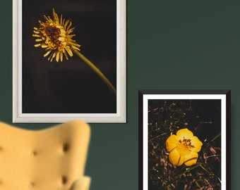 DIGITAL floral PHOTO bundle - Print It Yourself - Flowers of fire - Roses, dandelions and butterscotch