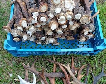 Mixed Random Roe Deer Antler Lot 1.5 KG (3.3LBs) Roe Antlers Any Size or Shape Super Deal