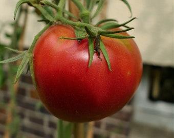 Tomato Bernese Roses (10 grains)