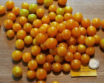 Bolivian fruit tomato (wild tomato) (10 grains)