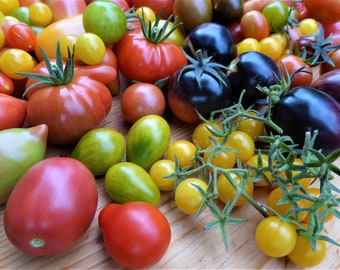 Colorful tomato mix (10 varieties)