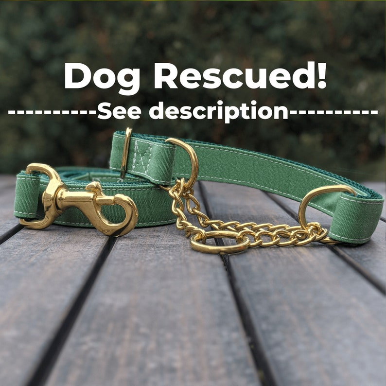Comes with Rescue VIDEO Green Martingale and Leash set Gold Chain See Description