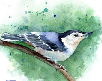 WHITE-BREASTED NUTHATCH Watercolor Pencil Drawing Painting Matted Print