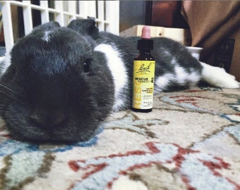 Rescue Remedy for Pets | Stress & Anxiety Relief | Natural, Safe, Alcohol Free | Bunny Rabbits, Guinea Pigs, Chinchillas, Hamsters, Rats