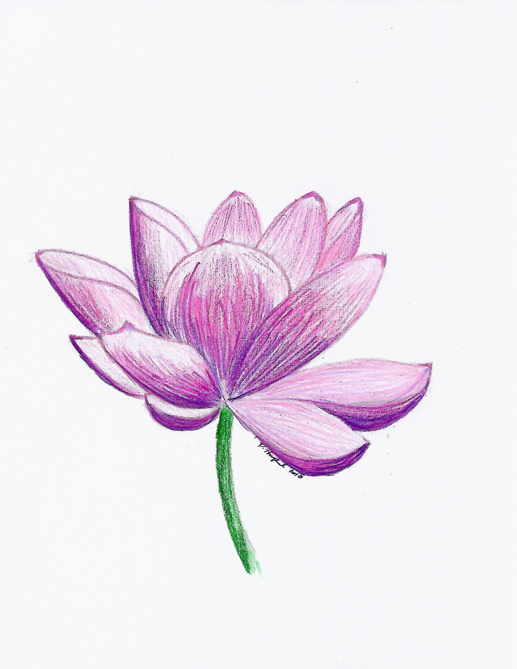 Lotus Flower Floral Pink Purple Small Print Hand Drawn Etsy