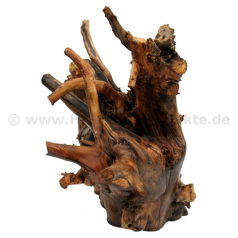 Tree root as decoration of apple tree Wood 40 x 55 cm image 0