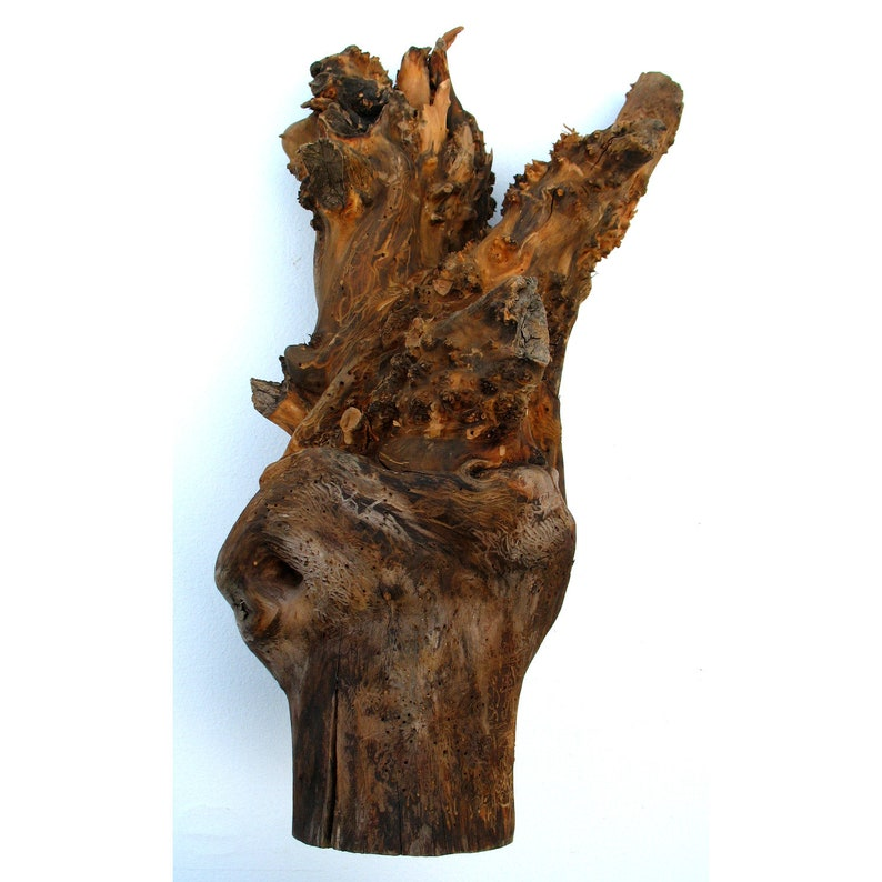 Tree root as a decoration made of pear wood 32x 32 cm image 0