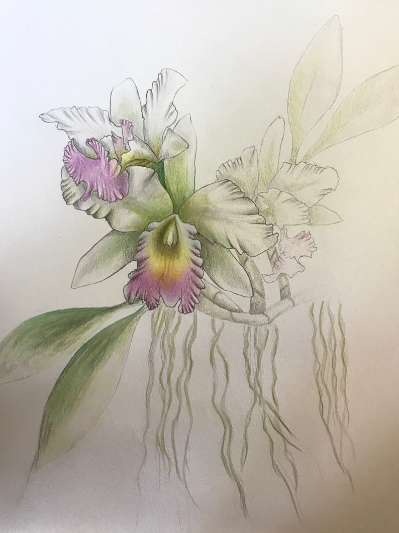 Orchid With Aerial Roots Etsy