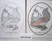 Delaware - Black Line Drawing Limited Edition Bundle