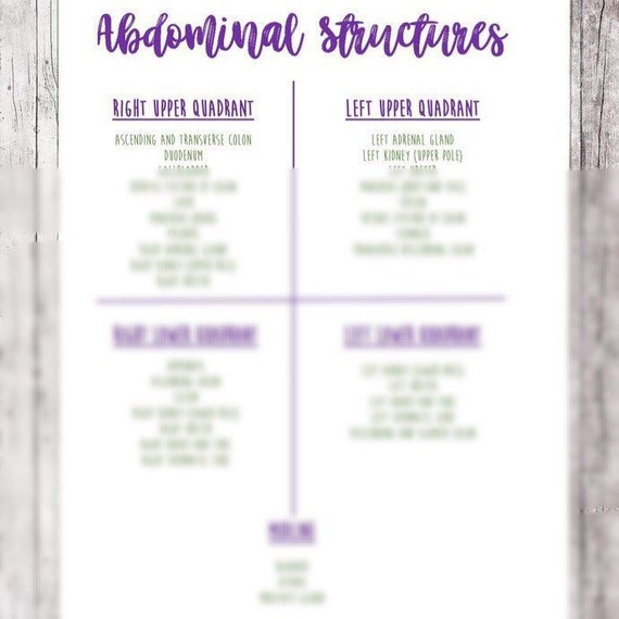 Abdominal Structures Reference Sheet Abdominal Quadrants Etsy