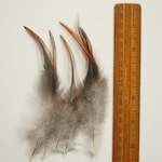 Rooster Feathers craft feathers ethically harvested feathers jewellery home decor wall hangings dream catchers 4