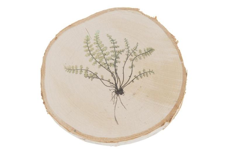 With Fern Plant Print Birch Wood Slice 16-19cm x 1.5cm