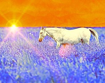 White Horse Sunset Photo - Art Series Premium Canvas Print or Matted Metallic Print Wall Art