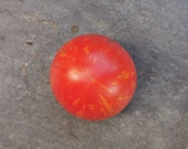 Mexican wild tomato yellow-red striped