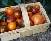 Mexican wild tomato byellow and red striped