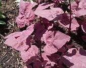 Red Garden Report - Historical Vegetables