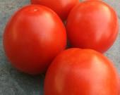 Cherry Romantika - Balcony Tomato