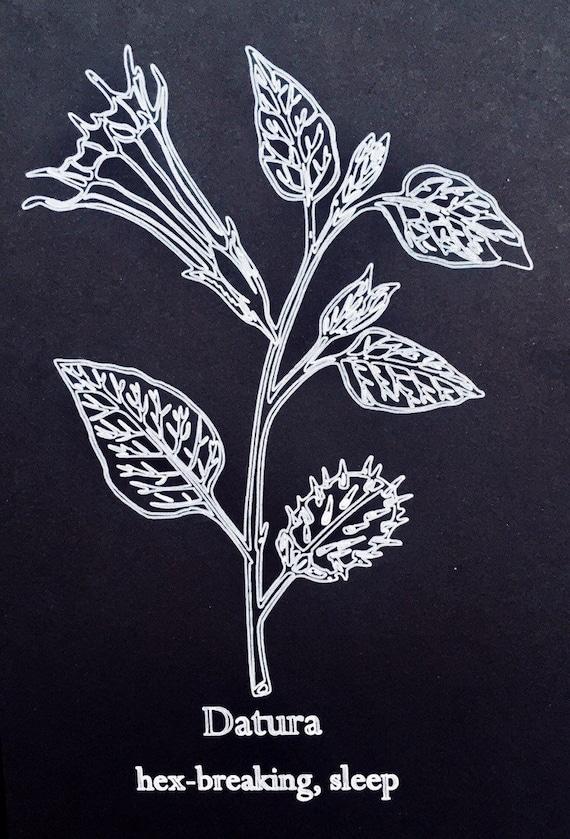 Botanical Print Datura