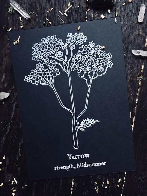 Yarrow 5x7 art print
