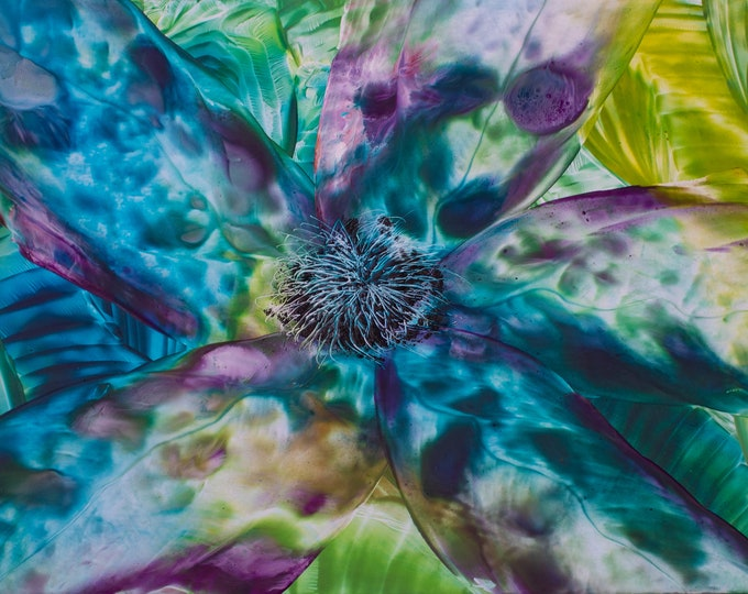 Peacock Flower - 8.5 x 11 Print
