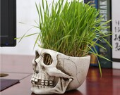 High Quality Resin Skull Flowerpot Grass Head Statues Green Plant Flower Pot Desk Decor Toy Home Halloween Party Decoration