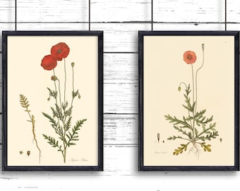 Vintage botanical prints:  Poppies Papaver rhoeas and Papaver dubium originally published in 1775 (set of two)