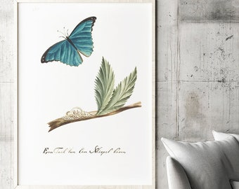 """Vintage Botanical Print: Translation of the text """"A branch of a medlar tree with caterpillar and butterfly,"""" originally published in 1763"""