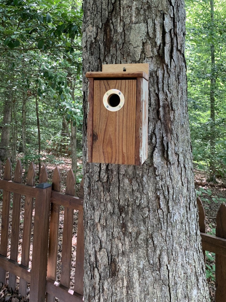 Medium-Sized Rustic Handmade Rough Timber Cedar and Recycled Farm Table Wood Outdoors Bluebird Nesting Box with Portal Protector