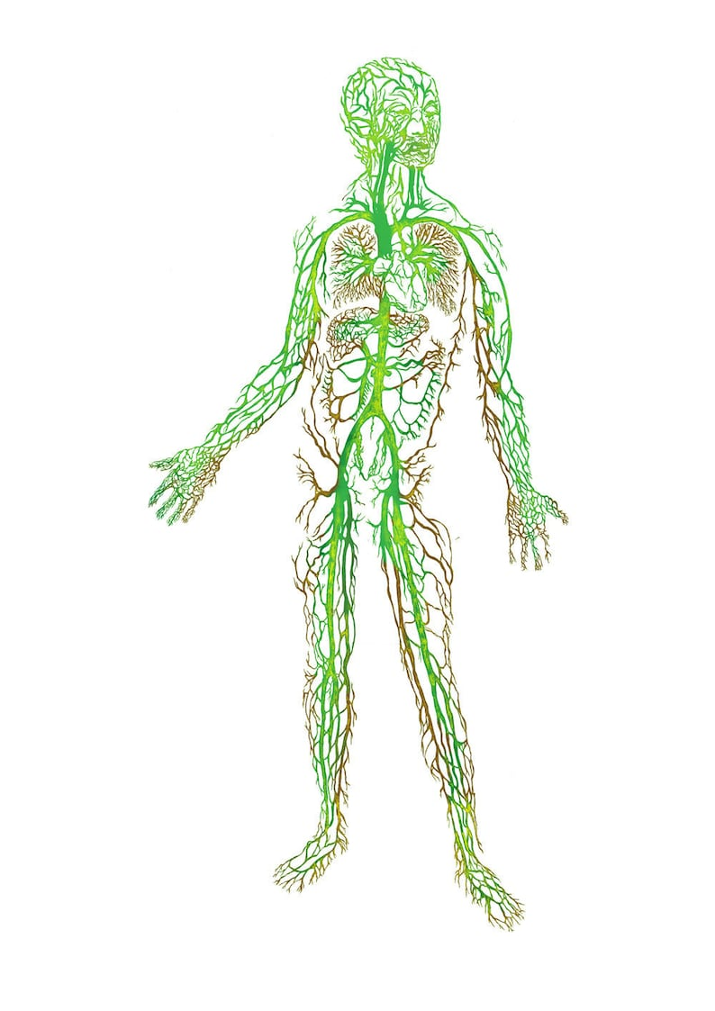 A4 C-type print Algae-man from Algaculture image 0