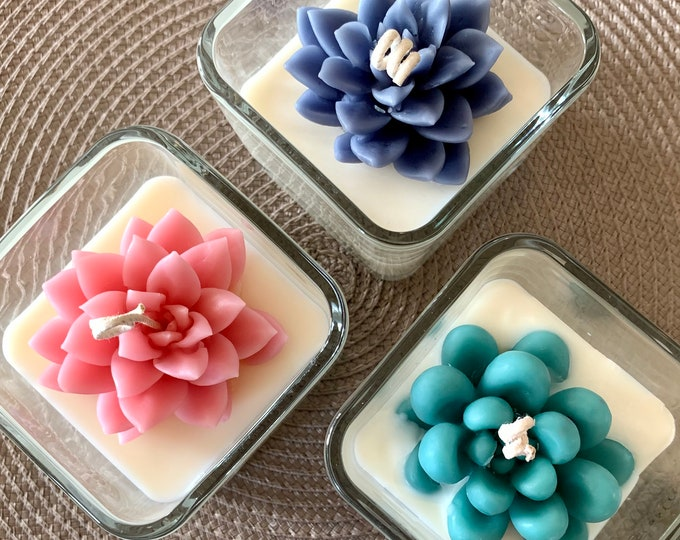 Small Succulent Candles in square jars (Almond scented)
