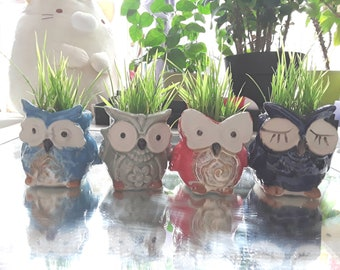 watercress wheatgrass //set of two pots Ceramic Owl Pots Windowsill Herb Set