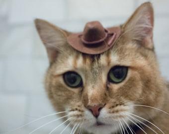 Cat Hat Etsy
