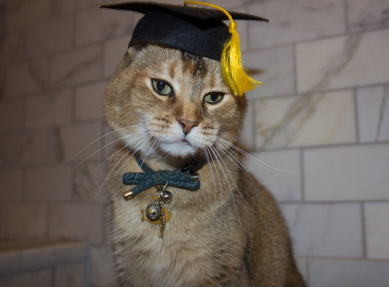 The Graduation Cat Cap | Stay at Home Mum