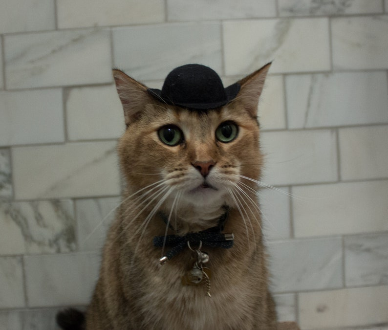 53aad3981a8d1 Black Bowler Cat Hat Tough guy Cat Hat FREE SHIPPING