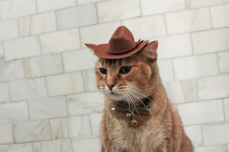 Indiana Jones Cat Cowboy Hat | Stay at Home Mum