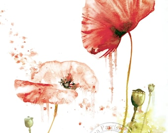 Poppy Study Open Edition Print from an original watercolour painting by Emma Parrish