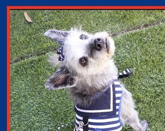 Sailor Pet Harness & Leash